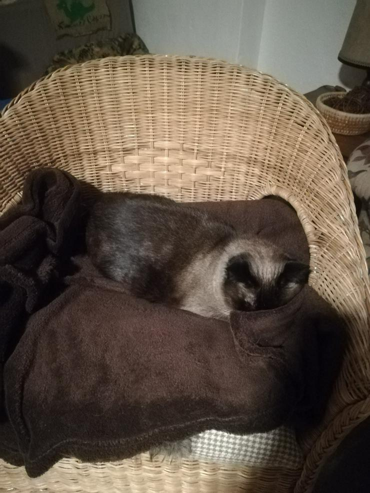 Bild 4: Ansbacher Katzenpenion, Katzenpension, catsitting, Hausbetreuung, Tierbetreuung, Catsitting