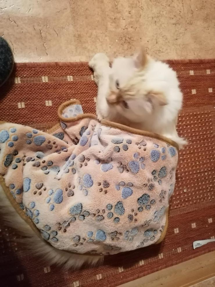 Ansbacher Katzenpenion, Katzenpension, catsitting, Hausbetreuung, Tierbetreuung, Catsitting