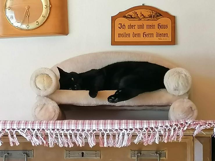 Bild 2: Ansbacher Katzenpenion, Katzenpension, catsitting, Hausbetreuung, Tierbetreuung, Catsitting