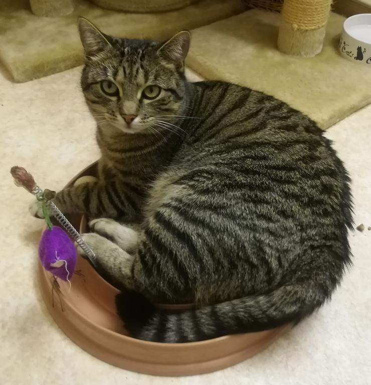 Bild 6: Ansbacher Katzenpenion, Katzenpension, catsitting, Hausbetreuung, Tierbetreuung, Catsitting
