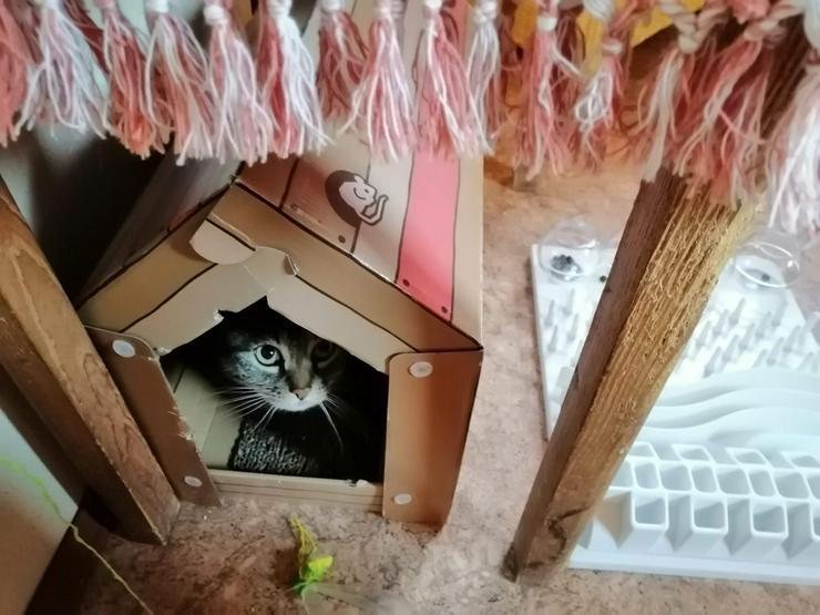 Bild 3: Ansbacher Katzenpenion, Katzenpension, catsitting, Hausbetreuung, Tierbetreuung, Catsitting
