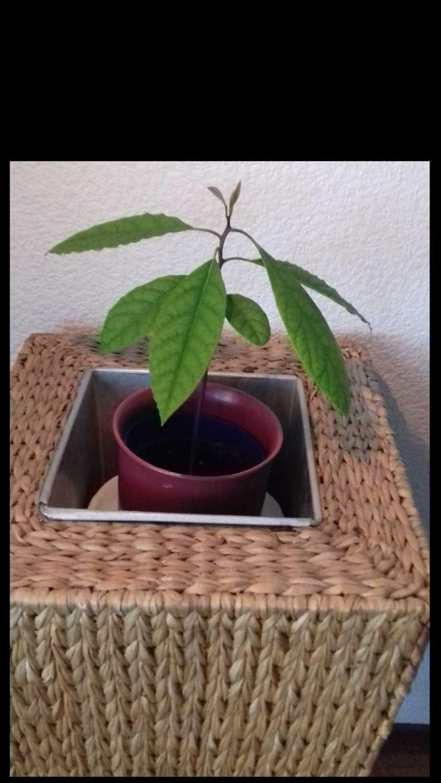 verkaufe exotische Pflanzen