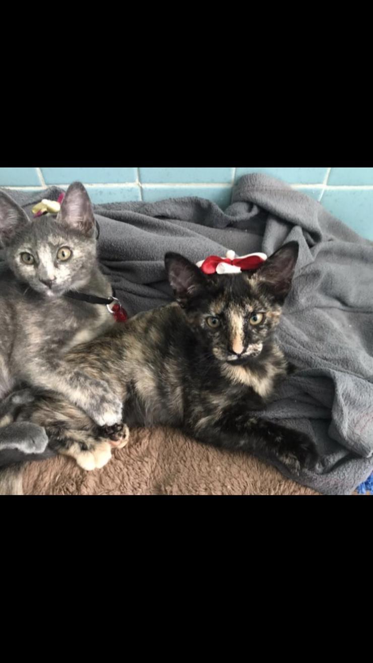 Carey CAT Schwestern suchen liebevolles zuhause
