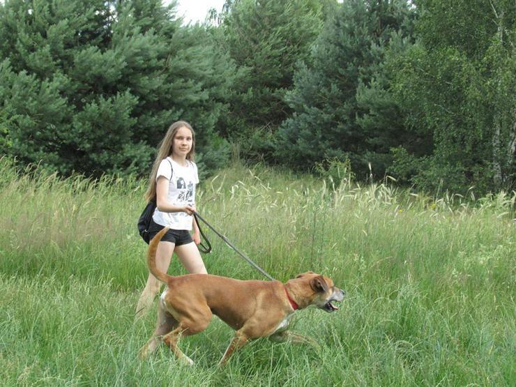 Hund zur Adoption - BOSS