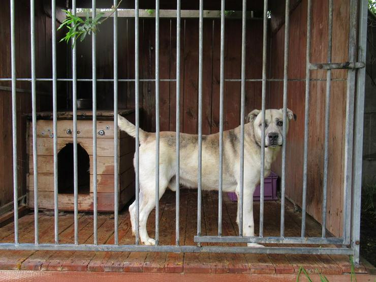 Hund zur Adoption - VEGAS