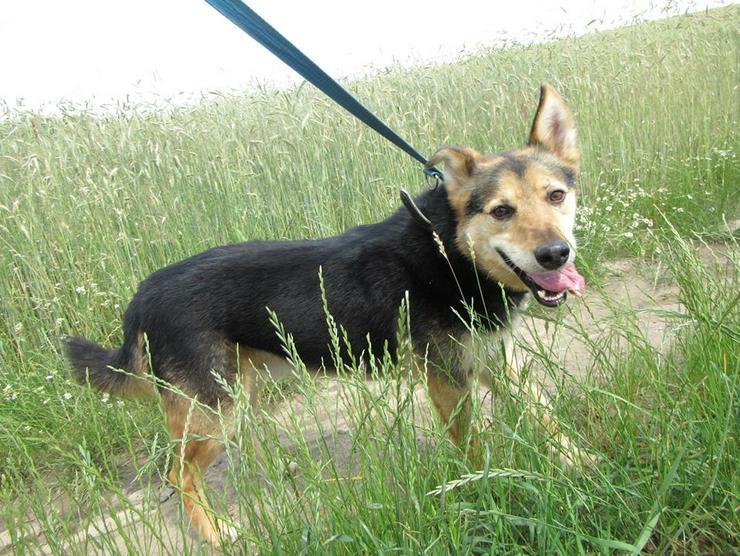 Hund zur Adoption - PAKO