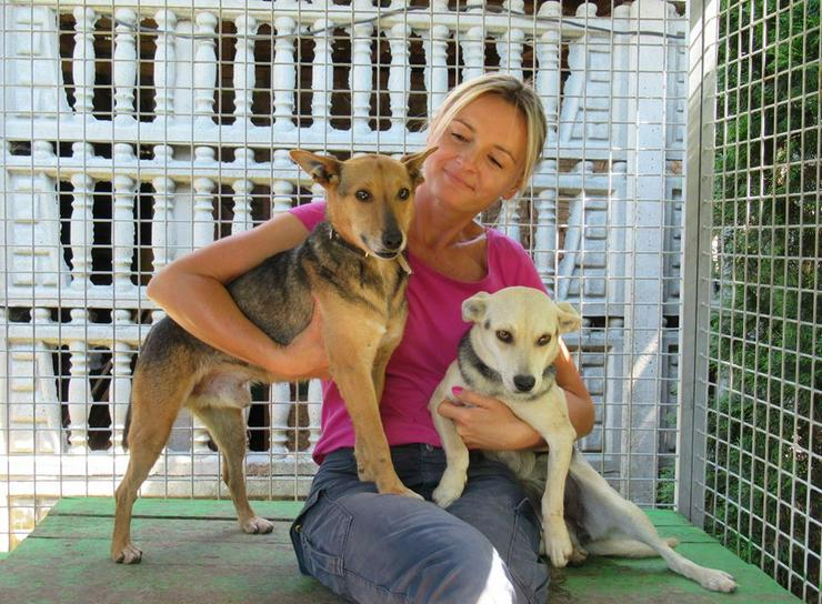 Hund zur Adoption - KOZIK