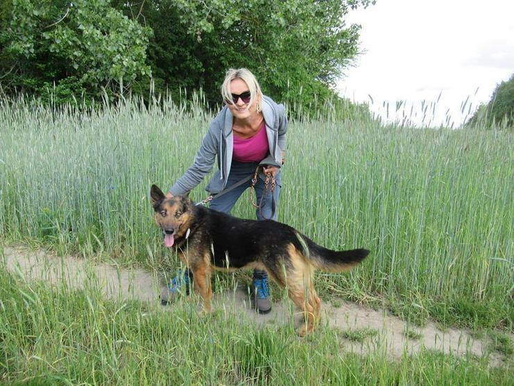 Hund zur Adoption - PUFI