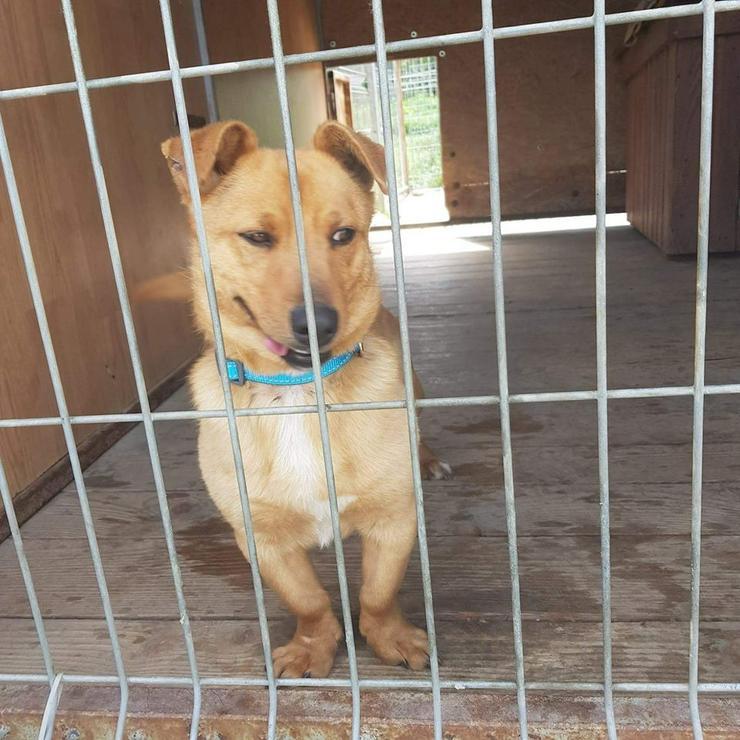 Hund zur Adoption - PIMPEK