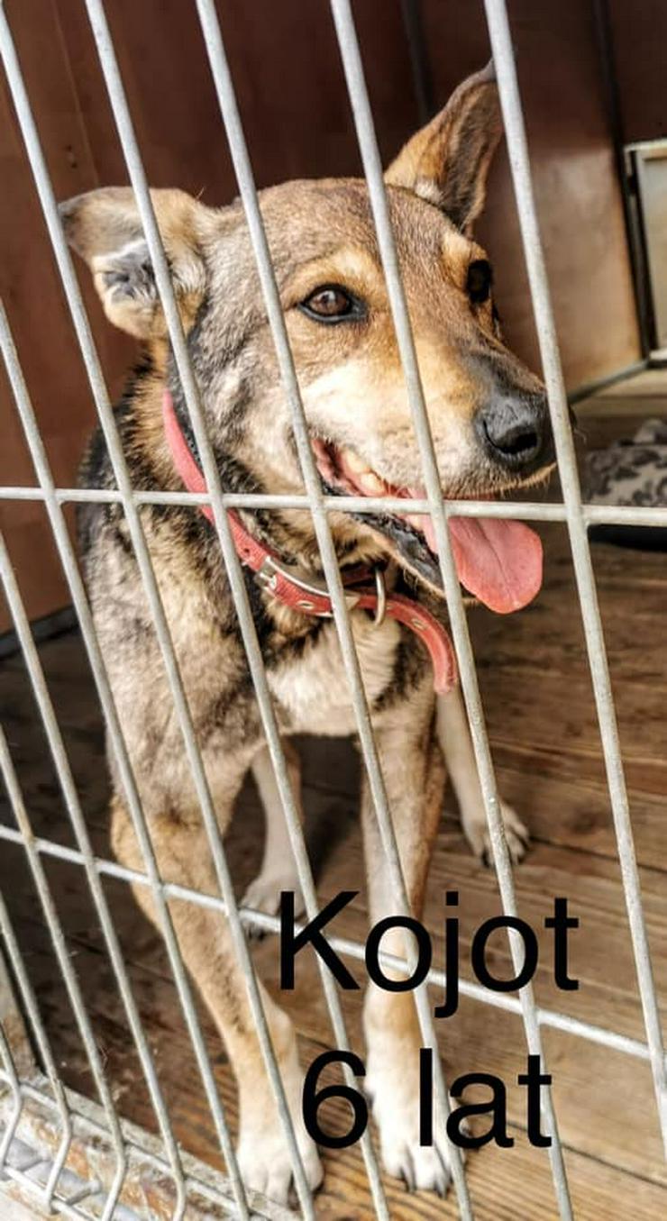 Hund zur Adoption - KOJOT