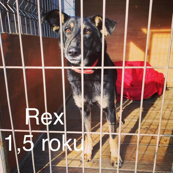 Hund zur Adoption - REX