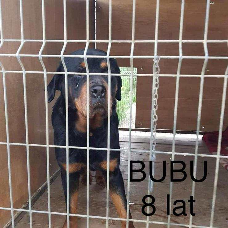 Hund zur Adoption - BUBU - Mischlingshunde - Bild 1
