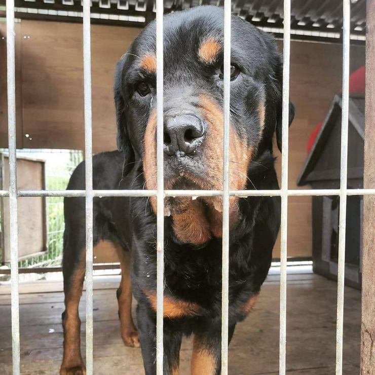 Bild 5: Hund zur Adoption - BUBU