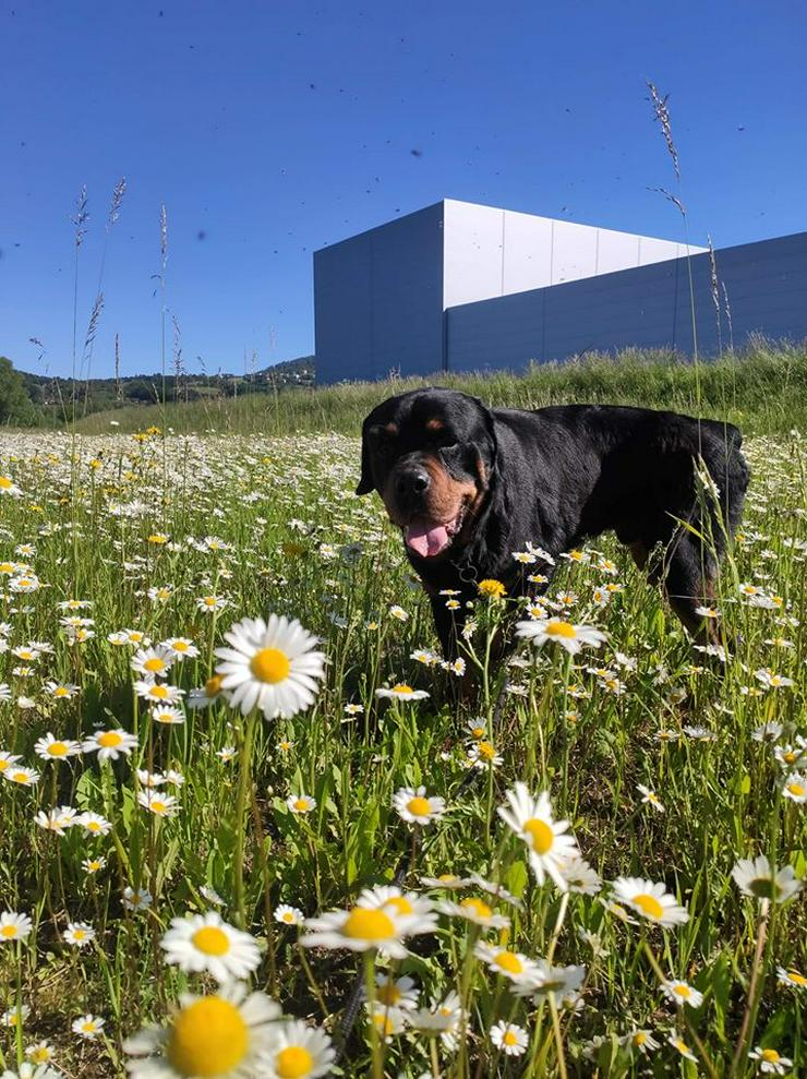 Bild 3: Hund zur Adoption - BUBU
