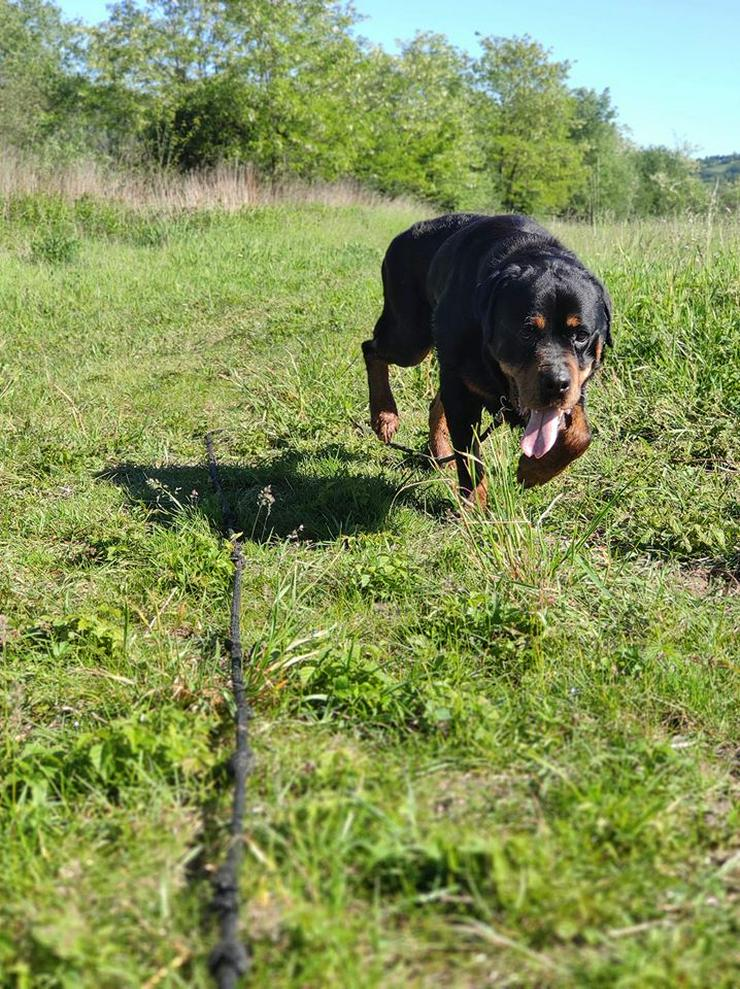 Bild 4: Hund zur Adoption - BUBU