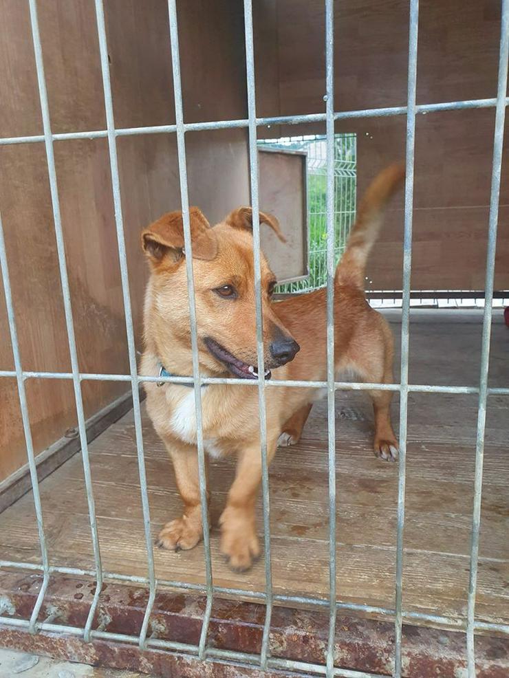 Hund zur Adoption - TERRY