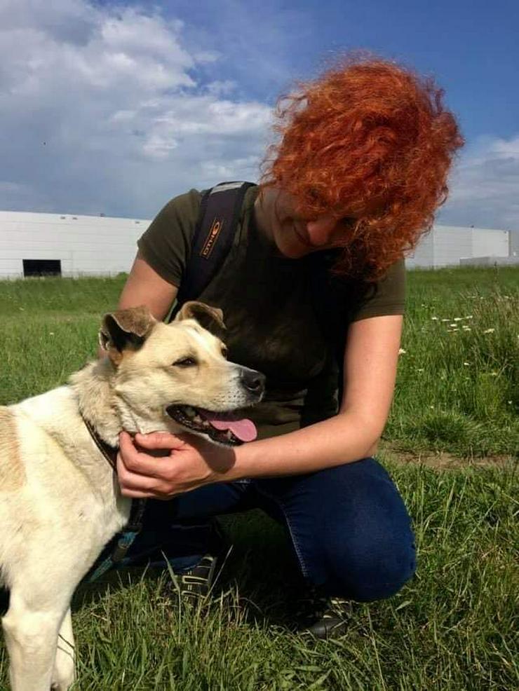 Bild 3: Hund zur Adoption - FRED
