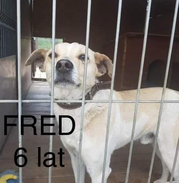 Bild 2: Hund zur Adoption - FRED