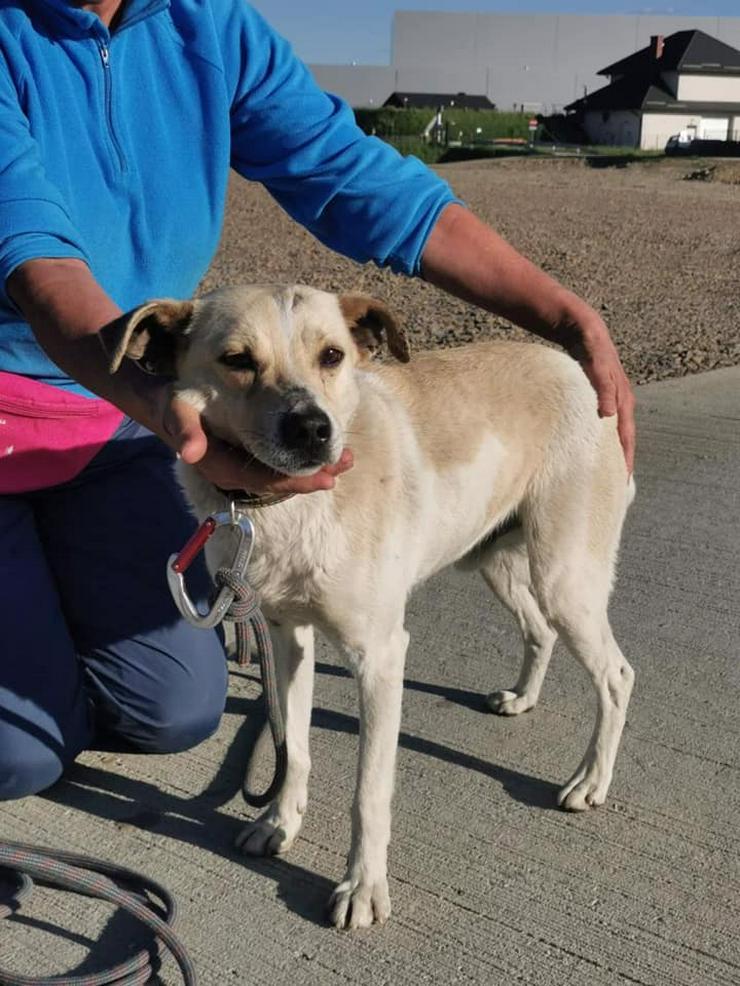 Bild 4: Hund zur Adoption - FRED