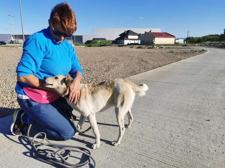 Hund zur Adoption - FRED