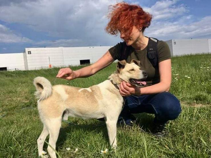Bild 5: Hund zur Adoption - FRED