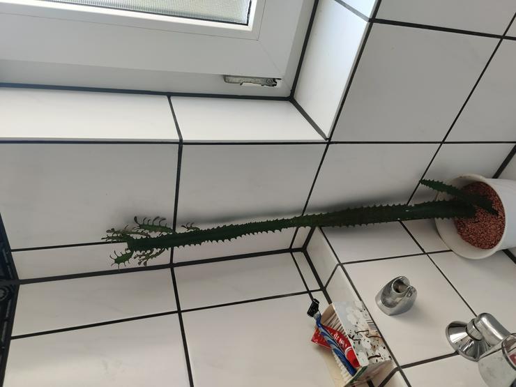 Kaktus an Selbstabholer
