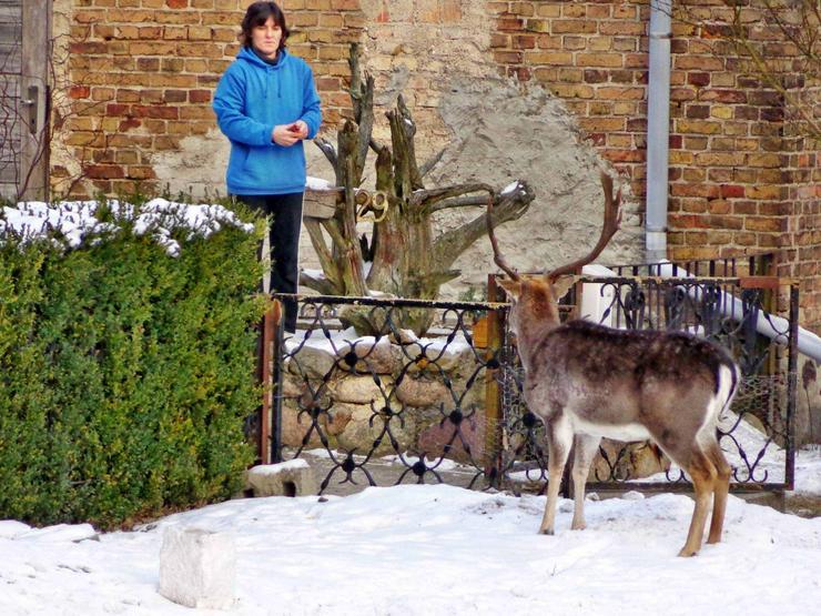 Bild 11: 3 Zimmer Ferienwohnung in Granzin-Kratzeburg im Müritz-Nationalpark, an der Havel, zu vermieten