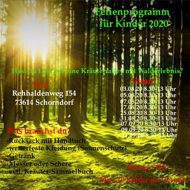 Kräuterralley Sommerferienprogramm 2020 - Sport, Outdoor & Tanz - Bild 1