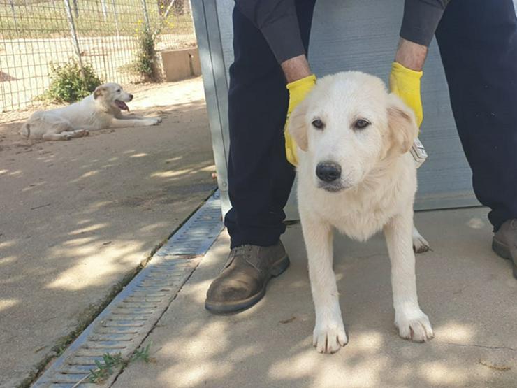 Ramona sucht ihr Zuhause  - Mischlingshunde - Bild 1