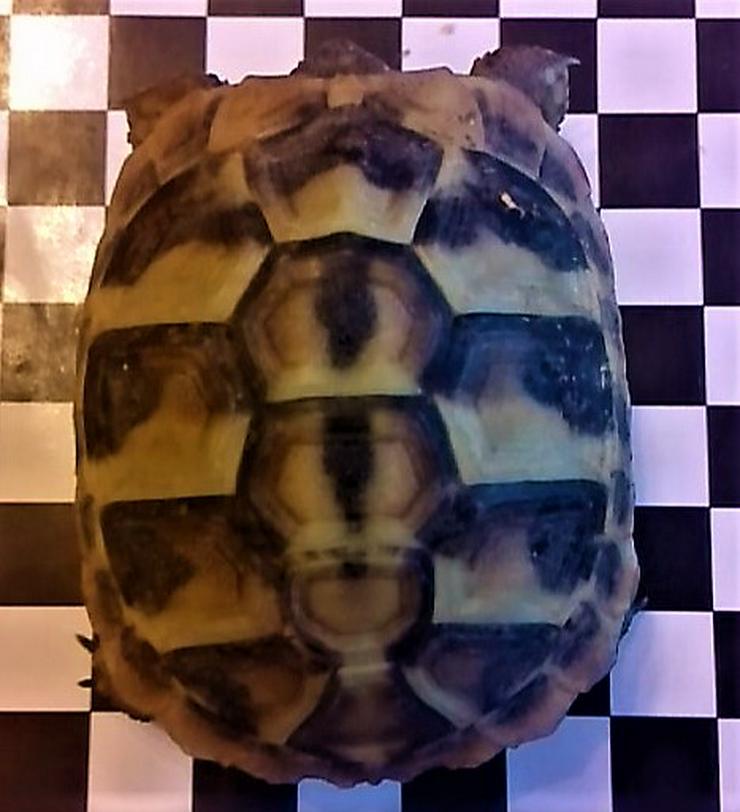 Bild 2: Landschildkröten thb aus 2019