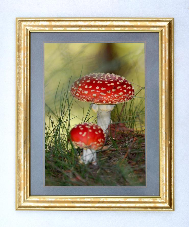 Bild 2: Bilderrahmen aus Kunststoff in Goldoptik 332 x 402 mm mit Plexiglasscheibe