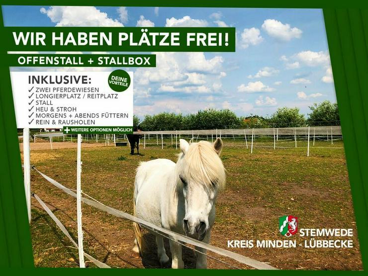 Offenstall, Pferdebox, Box Frei, Pferd - in Stemwede