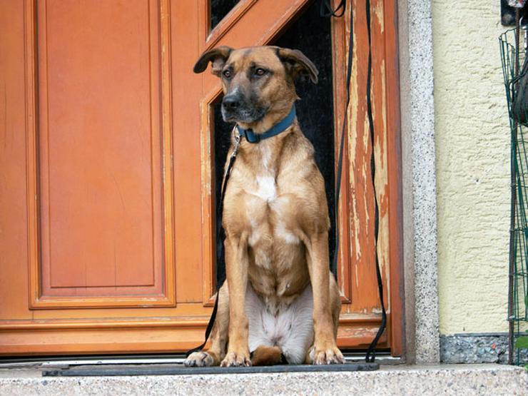 Bild 5: Gemma sucht ihr Zuhause