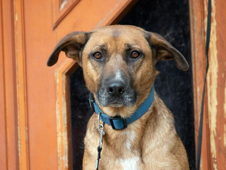 Gemma sucht ihr Zuhause - Mischlingshunde - Bild 1