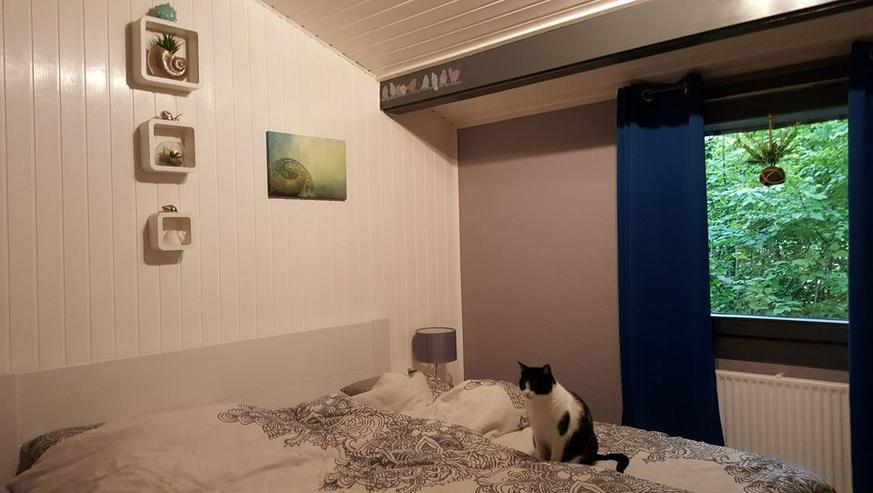 Bild 6: Urlaub mit Hunden und Katzen - freistehendes Ferienhaus in Waldhessen