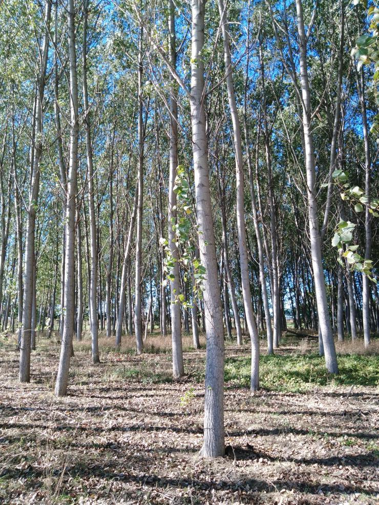 Wald zu werkaufen in Ungarn.