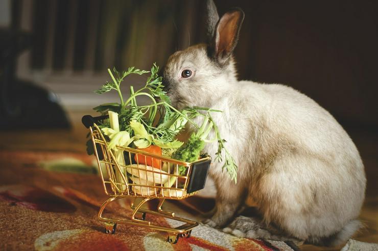 Verhaltens-, Ernährungsberatung und vieles mehr - Tierbetreuung & Training - Bild 1