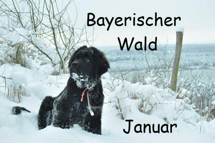 Winterurlaub mit Mau & Wau im Bayerischen Wald - Januar 2021 - Katzen & Hunde willkommen
