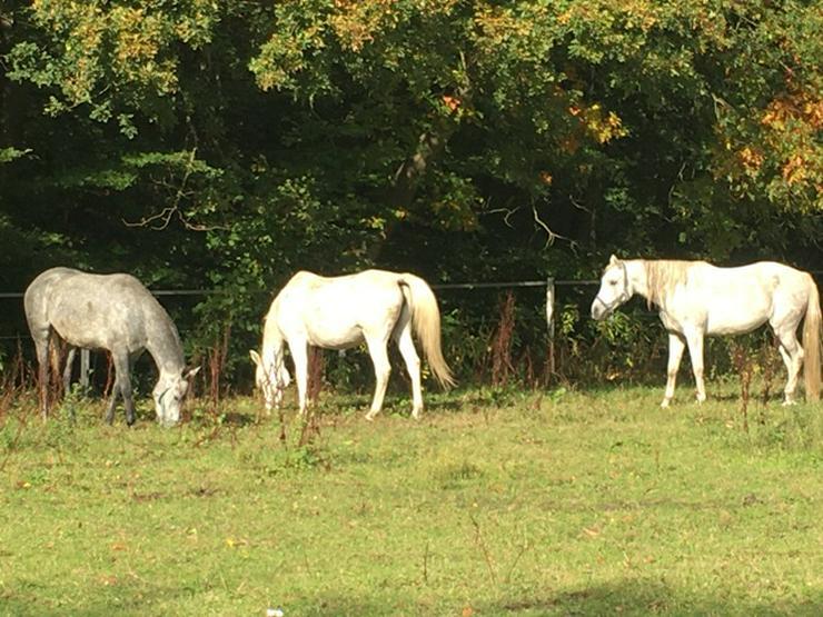 Bild 2:   *Pferdeliebhaber*, Wohnen und Arbeiten in ein Bauernhaus!