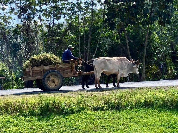 Bild 7: Kuba, Ferienwohnung, Urlaub, Unterkunft, havanna