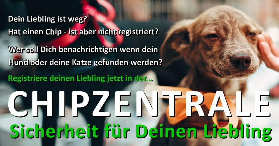 Bild 2: Chipzentrale - Datenbank für Hunde & Katzen
