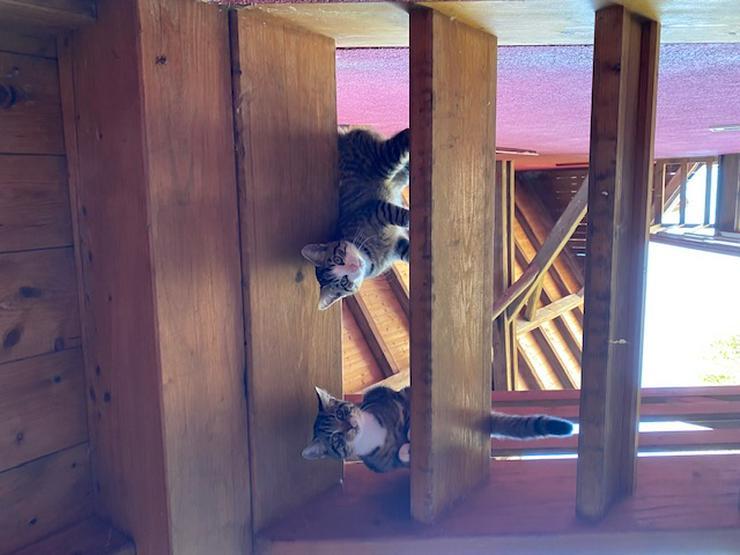 Bild 2: Katzenkinder zu verschenken
