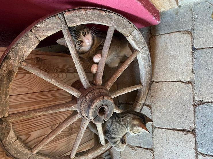 Bild 3: Katzenkinder zu verschenken
