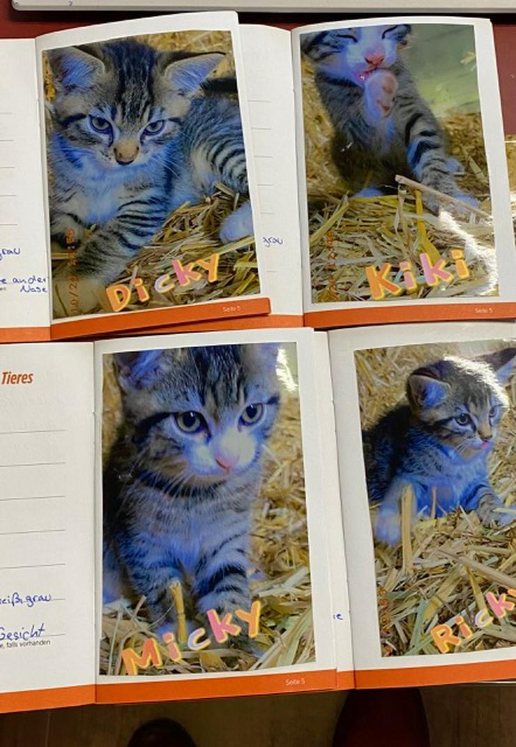 Katzenkinder zu verschenken - Mischlingskatzen - Bild 1