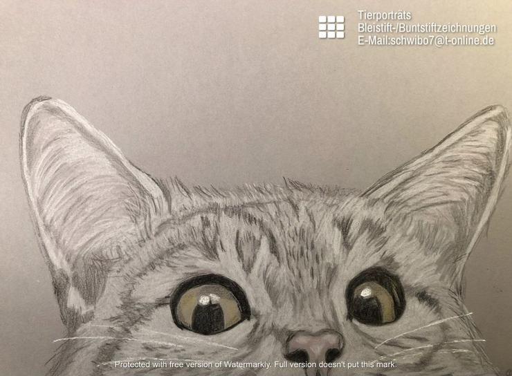 Tierportrait Bleistift- oder Buntstiftzeichnung