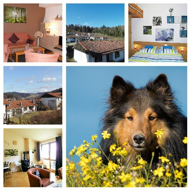Sommerferien im Bayerischen Wald - Ferien mit Mau & Wau - Haustiere willkommen !