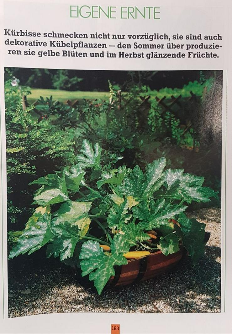 Bild 5: Ordner, Pflanzenpflege, Rund ums Haus, Raumgestalltung