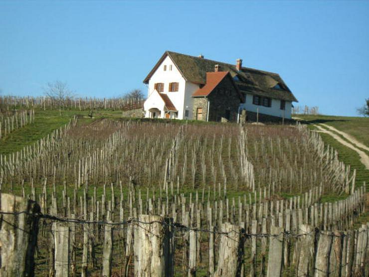 Familienweingut und Weinkeller zu verkaufen oder zu vermieten - Grundstück kaufen - Bild 4