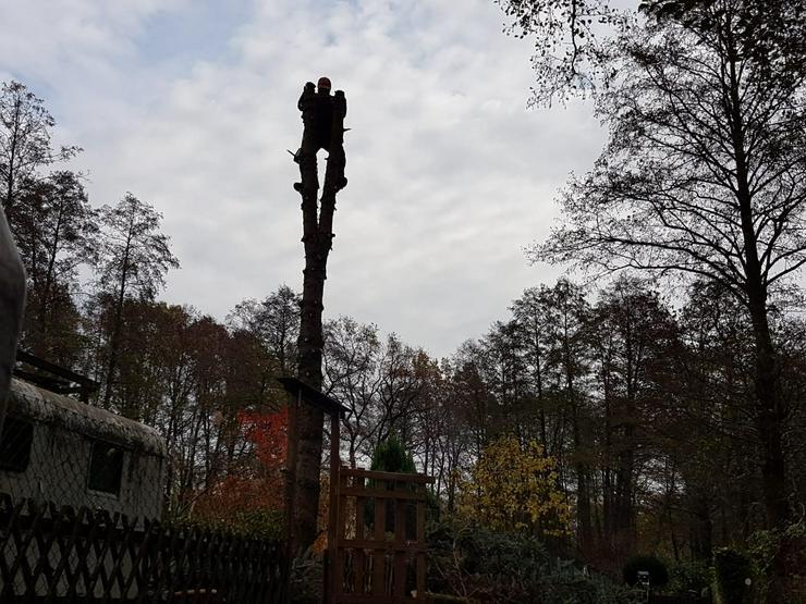 Baumfällungen, Baumstumpffräsung, Baumschnitt, Heckenschnitt, Entsorgung