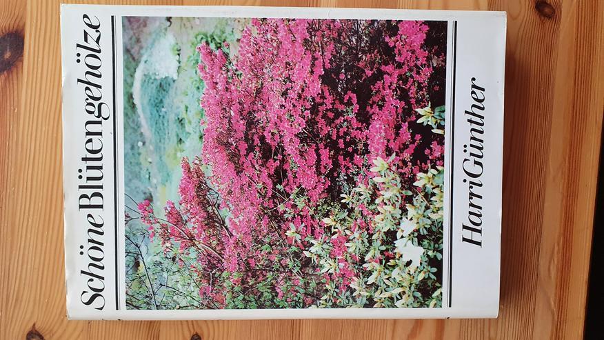 4  x Steingarten und Blüten Gehölze